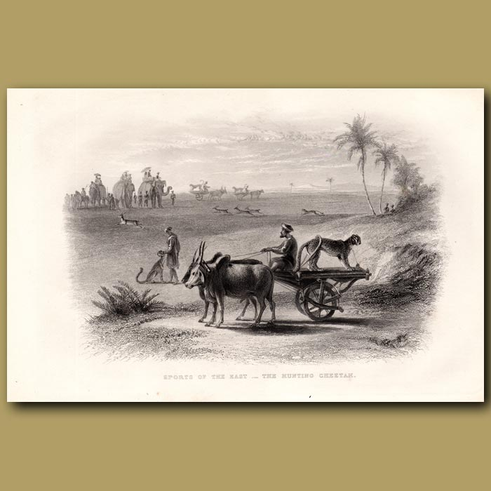 Antique print. Sports of the East – The Hunting Cheetah