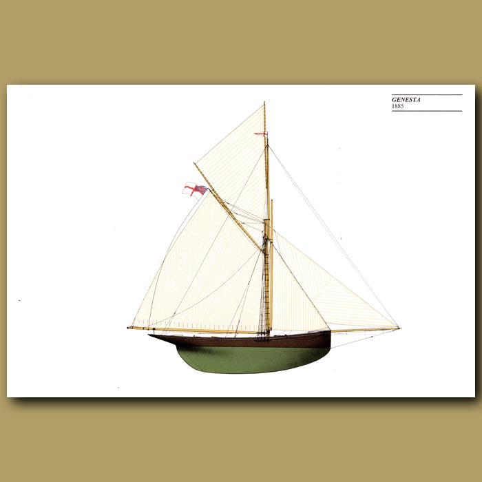 Antique print. America's Cup yacht: Genesta 1885