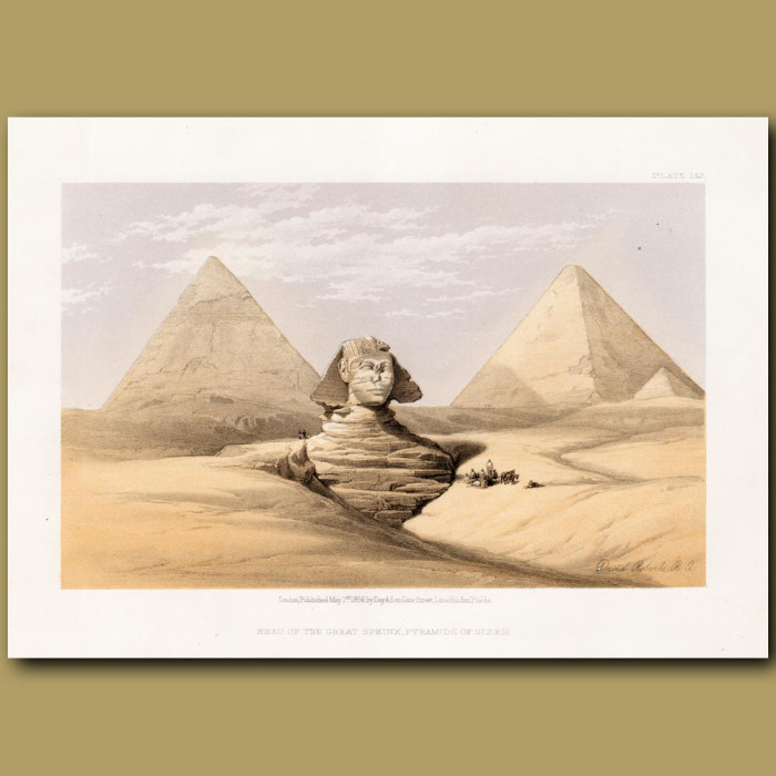 Head Of The Great Sphinx, Pyramids Of Geezeh.