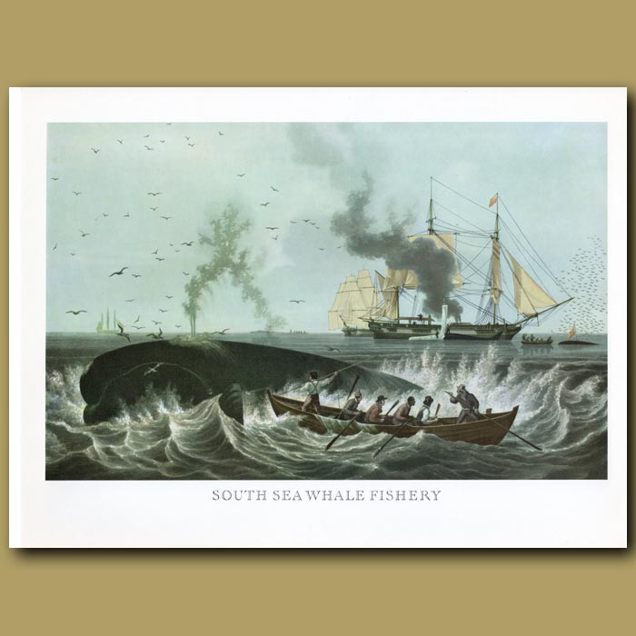 Antique print. South Sea Whale Fishery