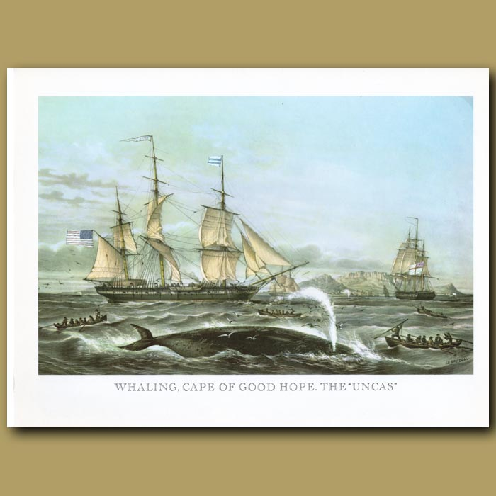 Antique print. Whaling Ships Cape Town
