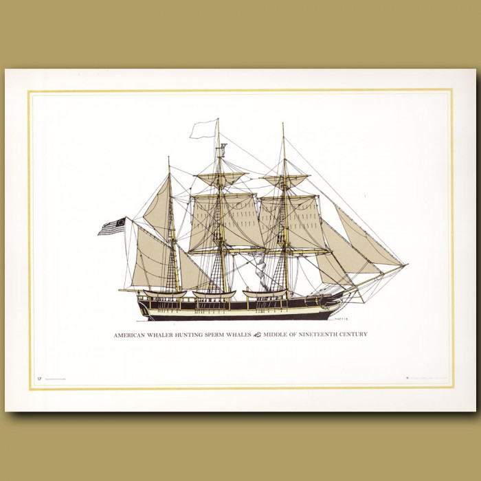American whaler hunting Sperm whales, middle of the 19th century: Genuine antique print for sale.