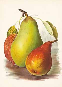 Chromolithograph from 1890s of pears